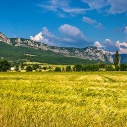 Montelimar - Fields