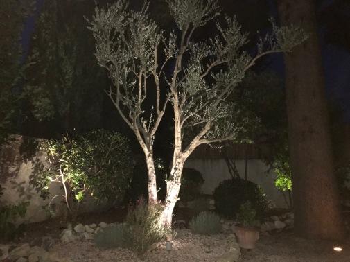Montelimar - Olive Tree at night